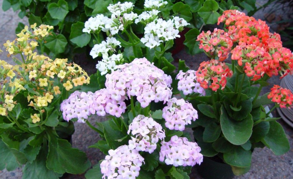 best flowering indoor plants for rest - White Flowering House Plants