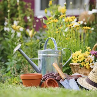 Money saving tips in gardening for everyone