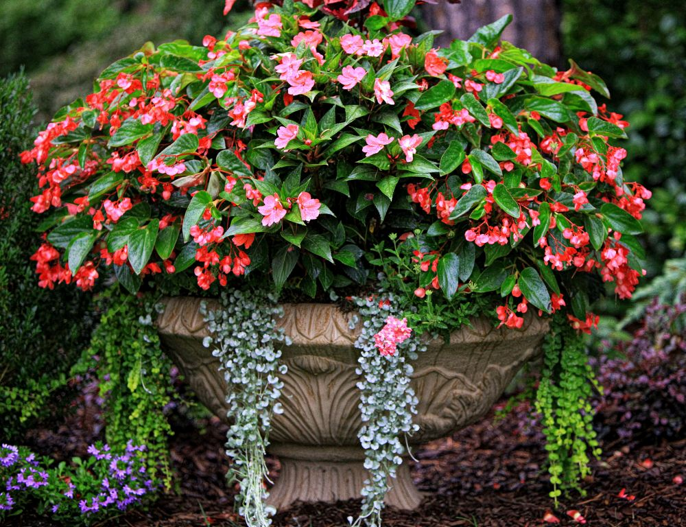Best flower combinations for containers - Best flower combinations for containers ...