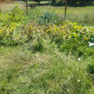 Fight weeds with organic solutions in the garden