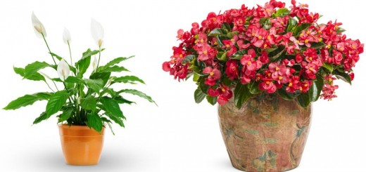 Plants that need no sunlight at home