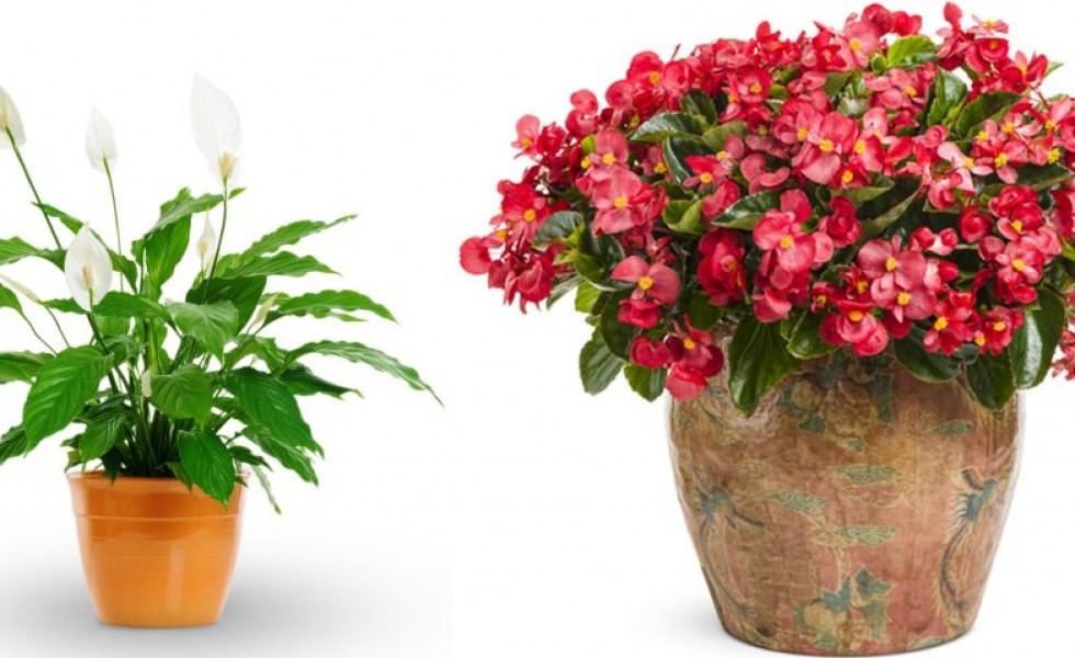 Indoor Plants That Don T Need Sunlight Indoor Flowering