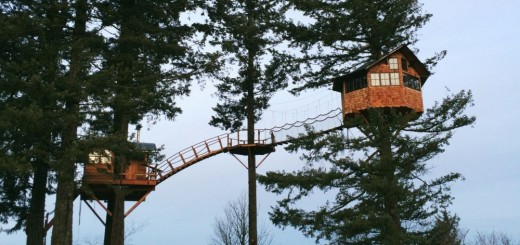 The tree house in the forest