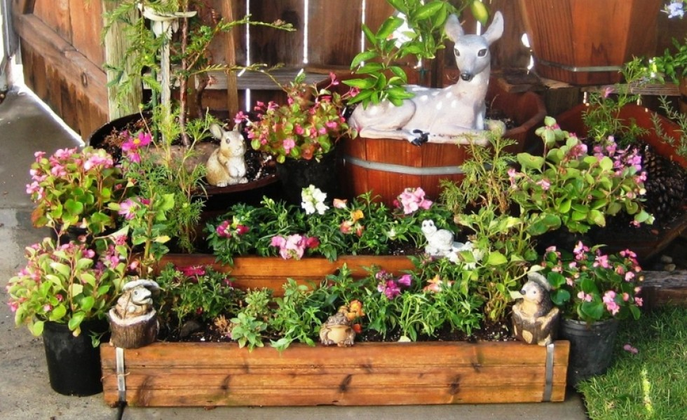 Container gardening for beginners in the city