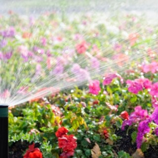 Gardening in summer heat can be easily done with these tips