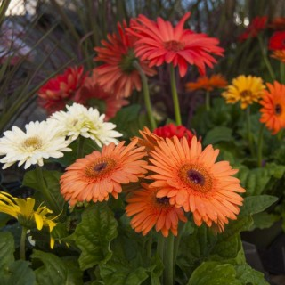 Flowers that bloom all year round in the garden