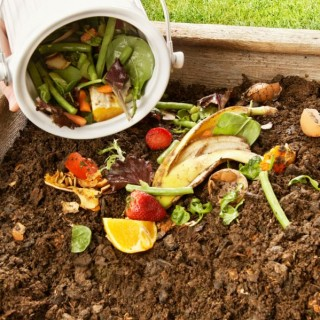 Best compost for flower pots at home