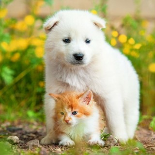 Toxic plants for dogs and cats in the garden