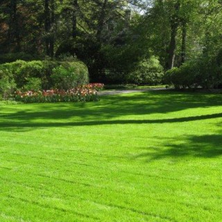 Grass lawn types in the yard