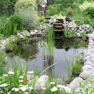 Building a garden pond step by step at home