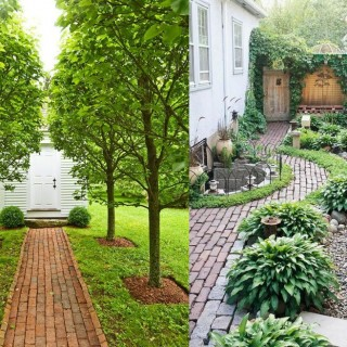 How to build an alley out of reused bricks in the garden