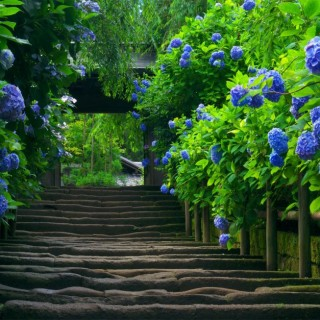 Plants with blue flowers in the garden