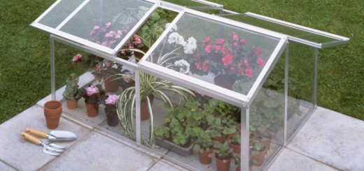 How to build a mini greenhouse at home