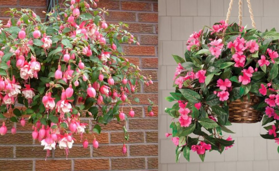 Hanging basket plants ideas for home
