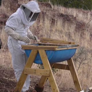 How to build a beehive in easy steps