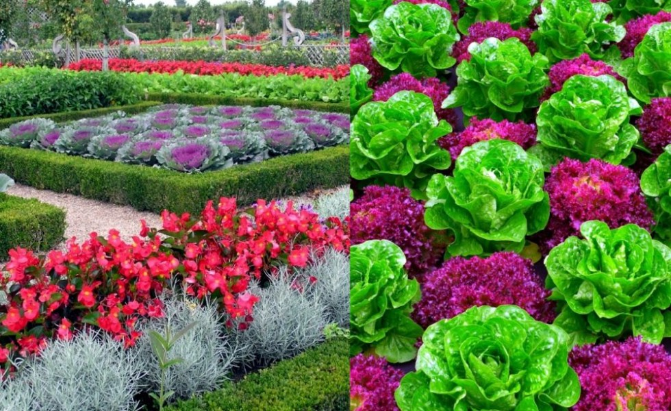 Ideas For Vegetable Garden Part - 45: Decorative Vegetable Garden Ideas For All