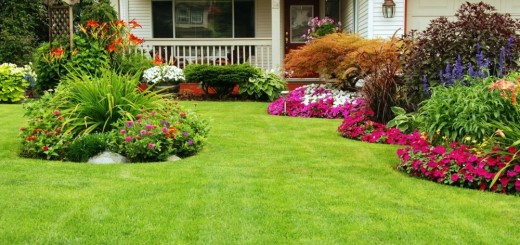 Autumn lawn care advice before winter