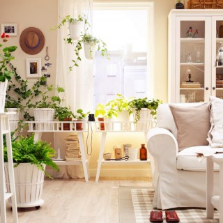 Plants for every room in your home examples