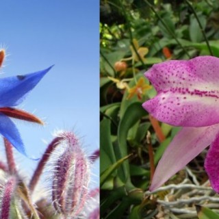 Flowers that rgow in greece archives houz buzz - Flowers native to greece a sea of color ...