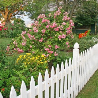 Garden fencing ideas archives houz buzz - Fight weeds with organic solutions practical tips in the garden ...