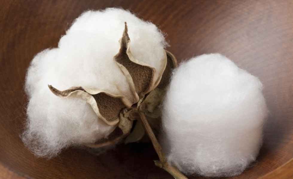 What to do with cotton balls 7 practical ideas houz buzz - Cotton ballspractical ideas ...