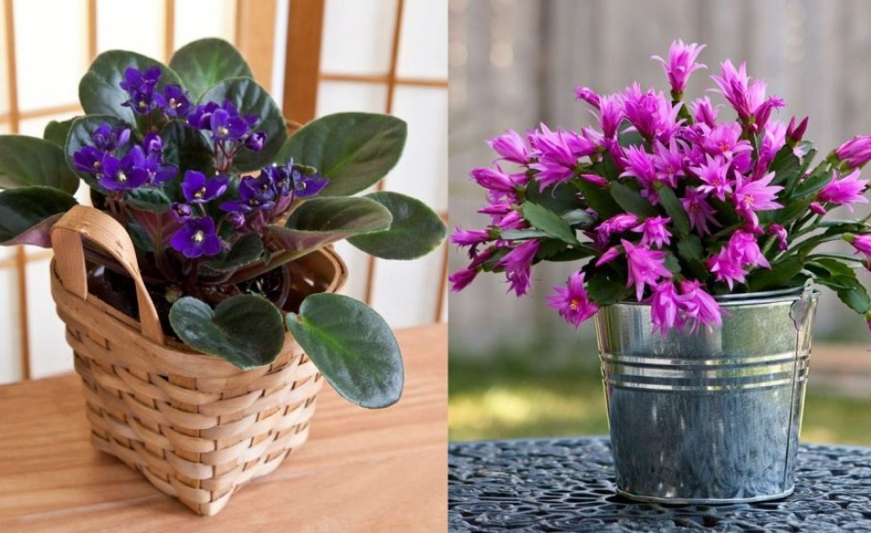 Most durable house plants in the world