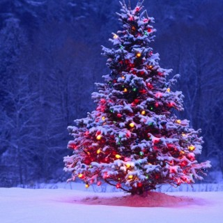 Interesting facts about the Christmas tree in winter