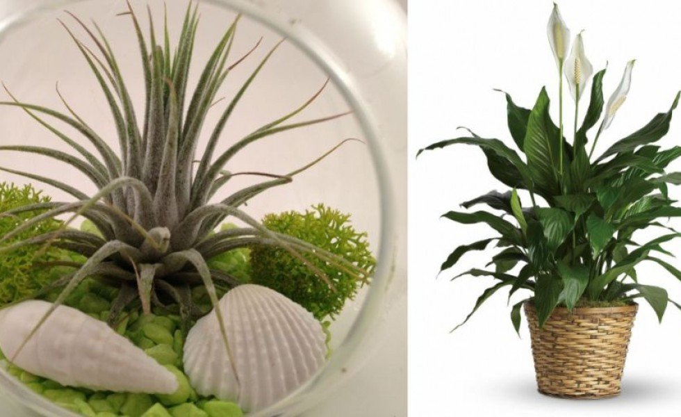 Superior Indoor Plants That Absorb Humidity And Toxins