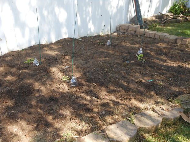 Diy drip irrigation systems saving water houz buzz - Nature curiosity stressed out plants emit animal like signals ...
