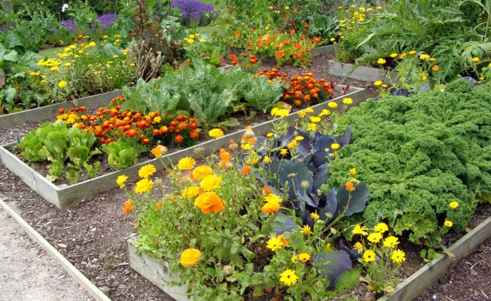 Companion planting in the garden