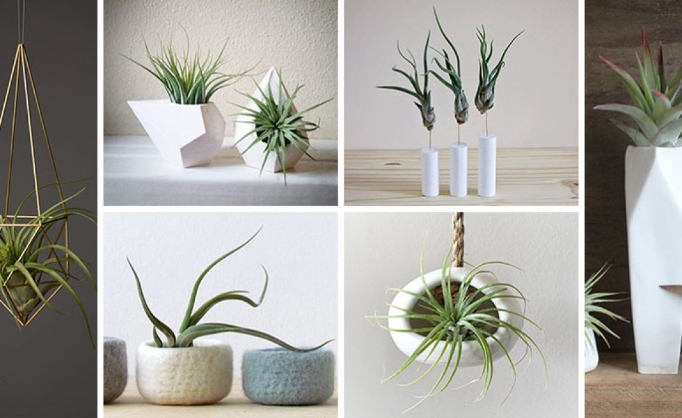 12 elegant ways to display air plants in your home houz buzz - Elegant ways to display air plants in your home ...