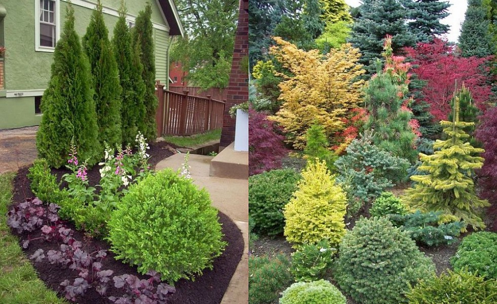 evergreen landscaping ideas house decor ideas