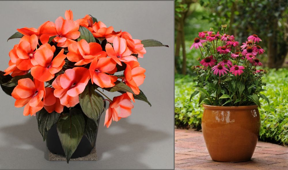 5 potted autumn flowers chromatic show on your balcony houz buzz - Fall landscaping ideas a mosaic of colors shapes and scents ...