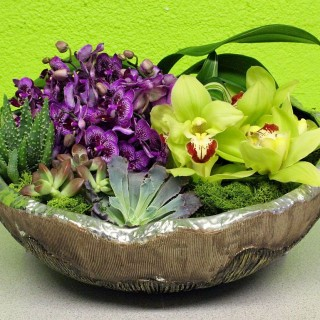 How to care for potted orchids archives houz buzz - How to care for potted orchids ...