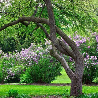 Spectacular garden trees archives houz buzz - How to keep intruders out of your garden ...