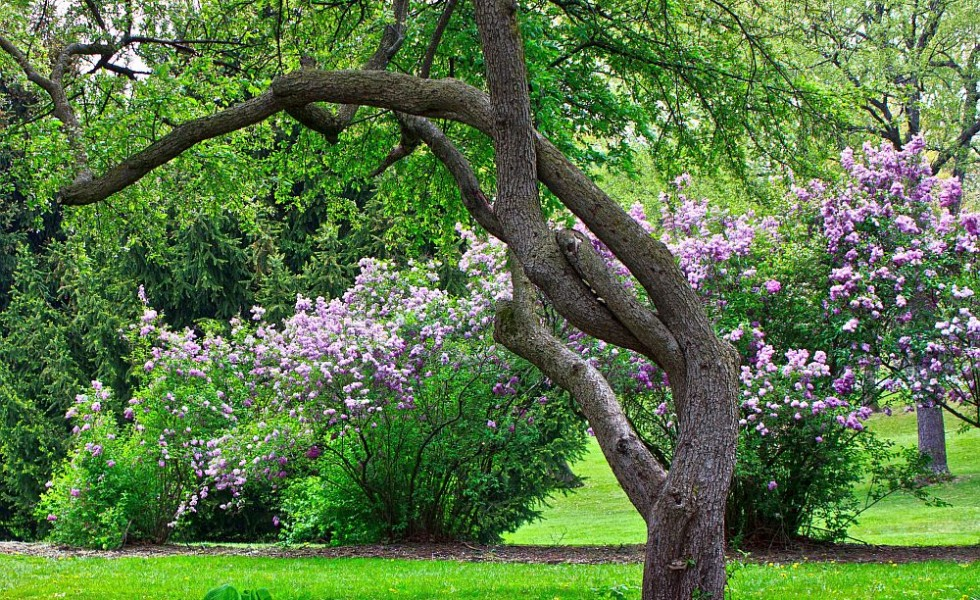 The Most Beautiful Garden Trees A Consummate Natural