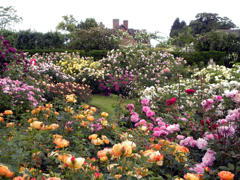 english rose gardens - Pictures Of Rose Gardens