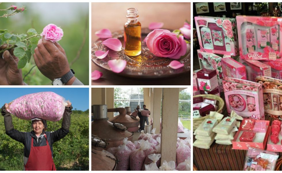 rose essential oil business