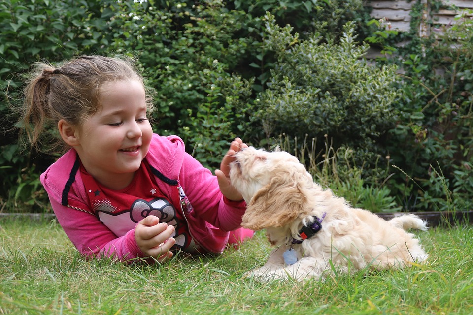 Best dog breeds with children the perfect playmate for - Best dog breeds kids ...