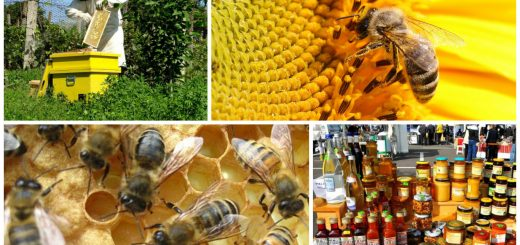 Craft ideas for beer cans - Beekeeping beginners small business ...
