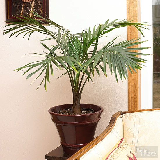 houseplants that thrive in low light