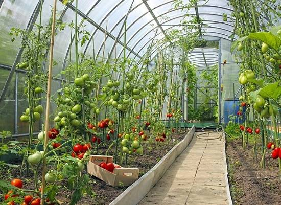 how to increase greenhouse production