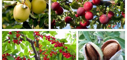 fruit trees for every type of weather