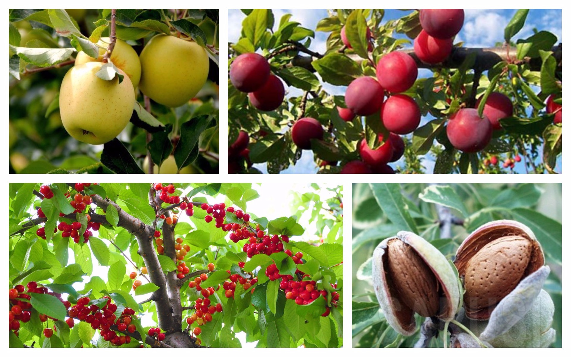 Fruit trees for every type of weather the best choices in your area - Fruit trees every type weather area ...