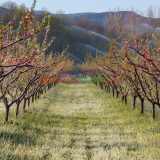 the most profitable orchards
