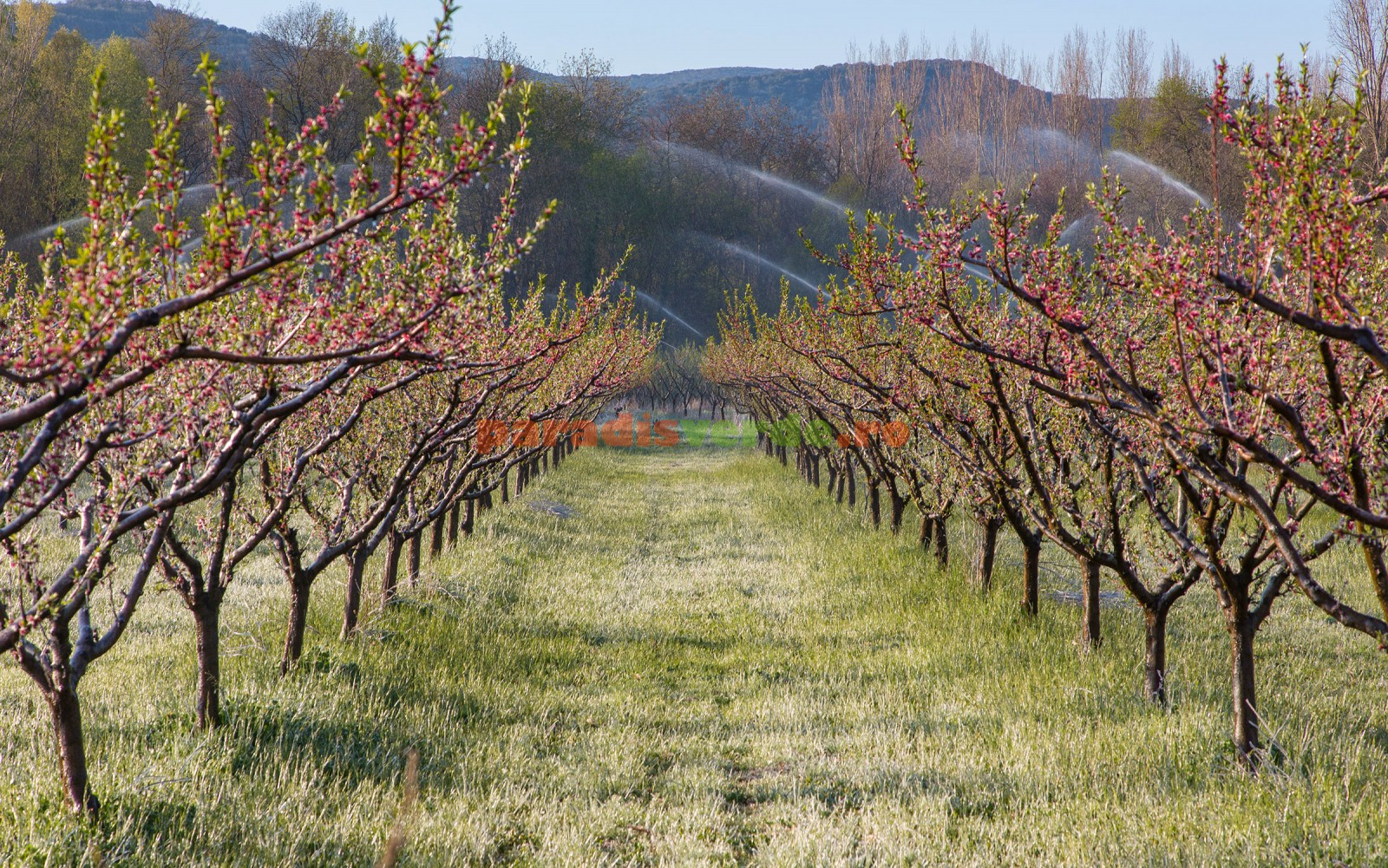 The most profitable orchards best selling and producing trees - The most profitable orchards ...