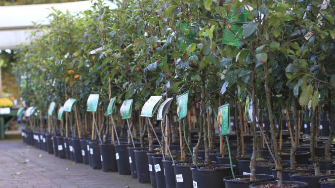 Planting fruit trees in autumn when and how to complete your orchard - Planting fruit trees in autumn ...