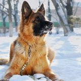 keeping your outdoor dog happy in winter