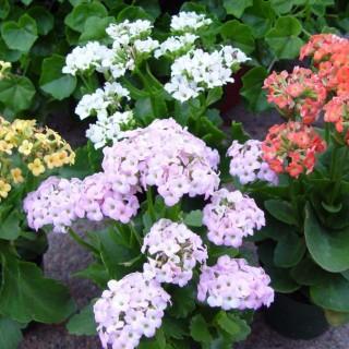 Best flowering indoor plants for rest