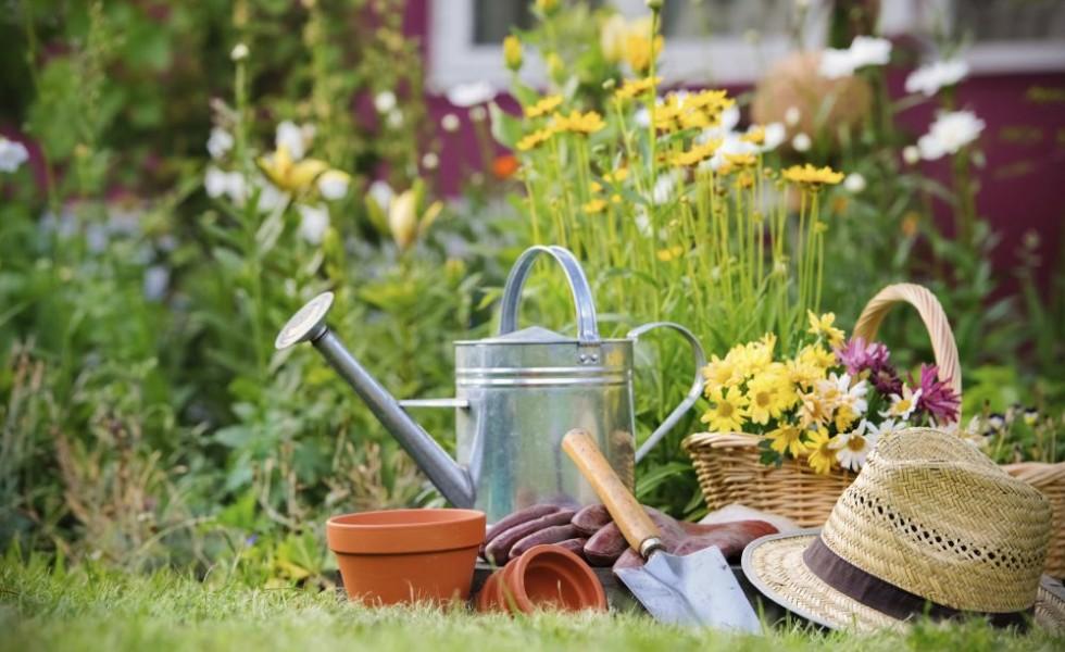 Money saving tips in gardening for everyone